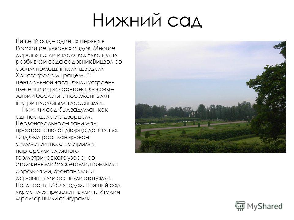 Нижний сад Нижний сад – один из первых в России регулярных садов. Многие деревья везли издалека. Руководил разбивкой сада садовник Вицвол со своим помощником, шведом Христофором Грацем. В центральной части были устроены цветники и три фонтана, боковы