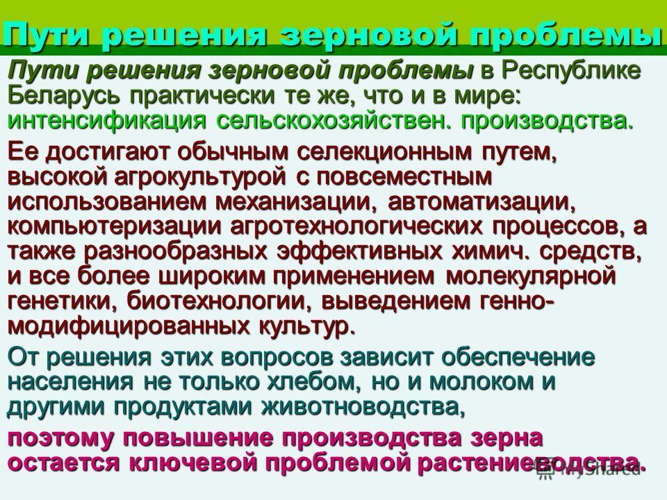Пути решения зерновой проблемы Пути решения зерновой проблемы в Республике Беларусь практически те же, что и в мире: интенсификация сельскохозяйствен. производства. Ее достигают обычным селекционным путем, высокой агрокультурой с повсеместным использ