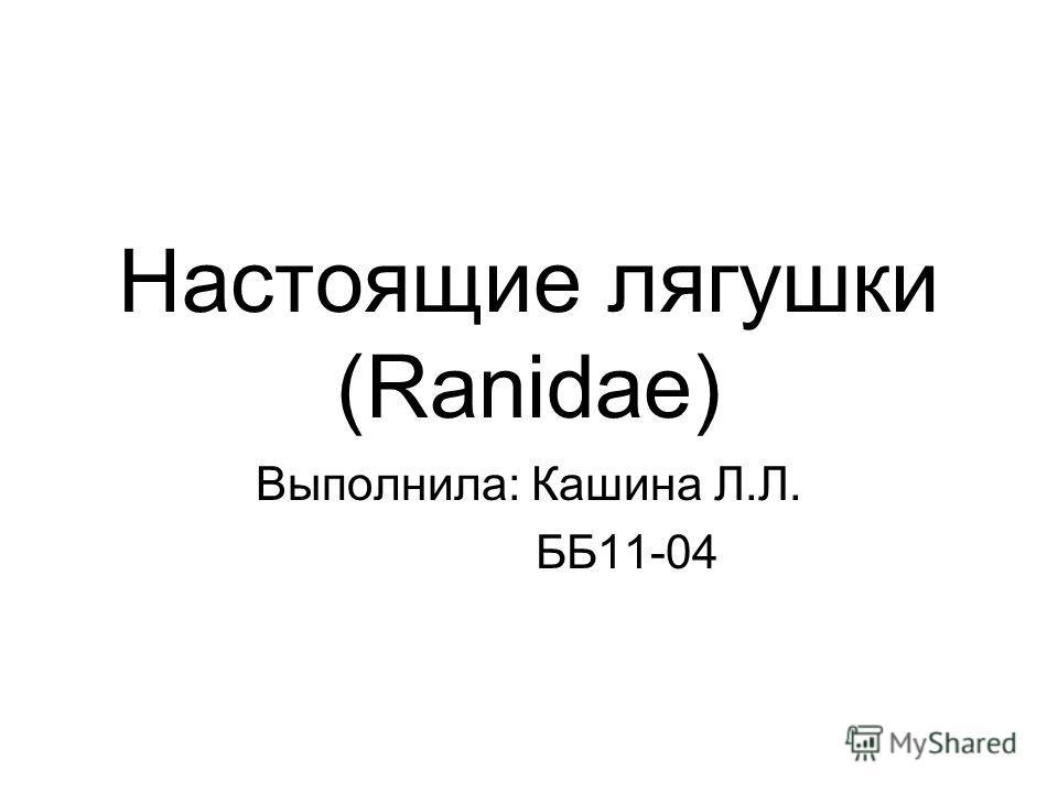 Настоящие лягушки (Ranidae) Выполнила: Кашина Л.Л. ББ11-04