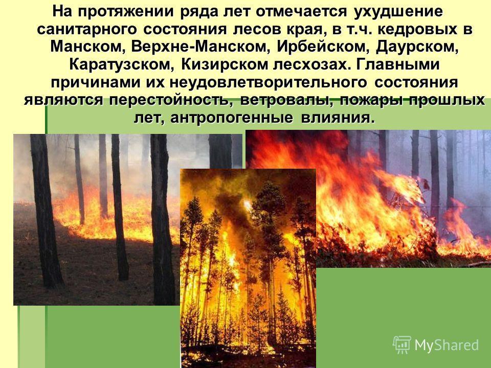 На протяжении ряда лет отмечается ухудшение санитарного состояния лесов края, в т.ч. кедровых в Манском, Верхне-Манском, Ирбейском, Даурcком, Каратузском, Кизирском лесхозах. Главными причинами их неудовлетворительного состояния являются перестойност