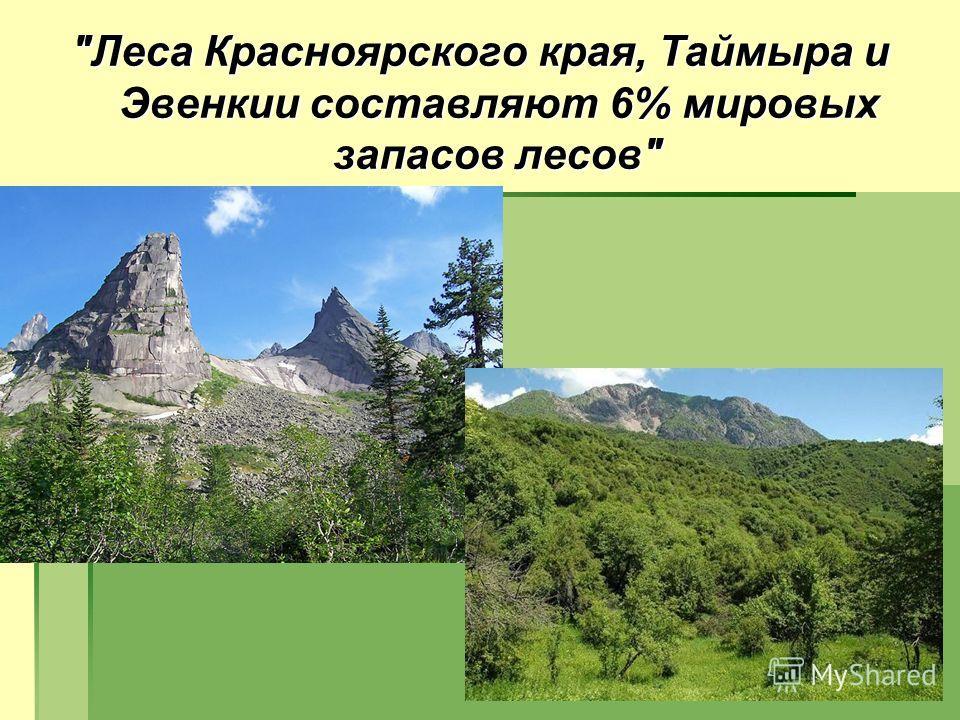 Леса Красноярского края, Таймыра и Эвенкии составляют 6% мировых запасов лесов