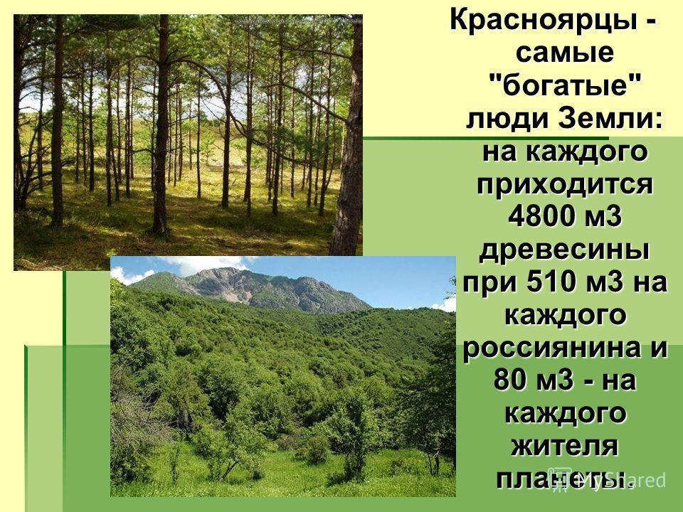 Красноярцы - самые богатые люди Земли: на каждого приходится 4800 м3 древесины при 510 м3 на каждого россиянина и 80 м3 - на каждого жителя планеты.