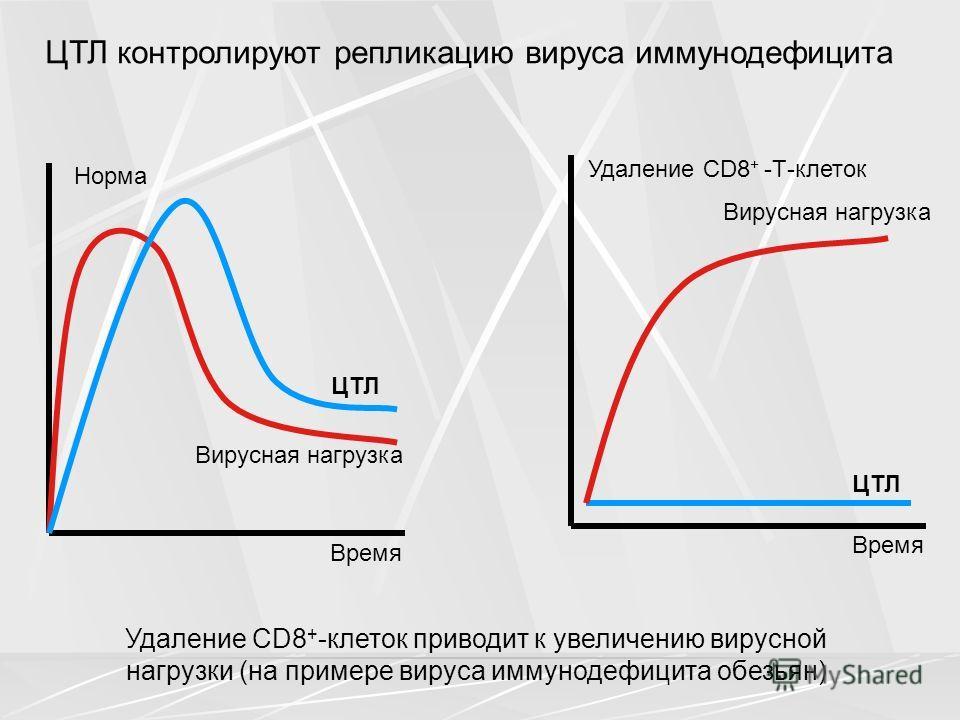 ЦТЛ Вирусная нагрузка Время Норма ЦТЛ Вирусная нагрузка Время Удаление CD8 + -Т-клеток ЦТЛ контролируют репликацию вируса иммунодефицита Удаление CD8 + -клеток приводит к увеличению вирусной нагрузки (на примере вируса иммунодефицита обезьян)