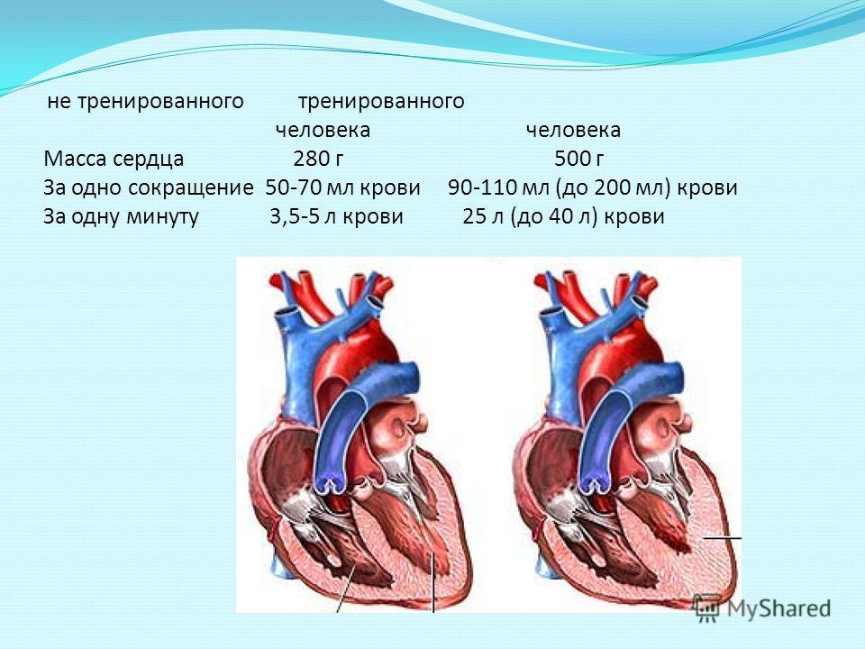 не тренированного тренированного человека человека Масса сердца 280 г 500 г За одно сокращение 50-70 мл крови 90-110 мл (до 200 мл) крови За одну минуту 3,5-5 л крови 25 л (до 40 л) крови