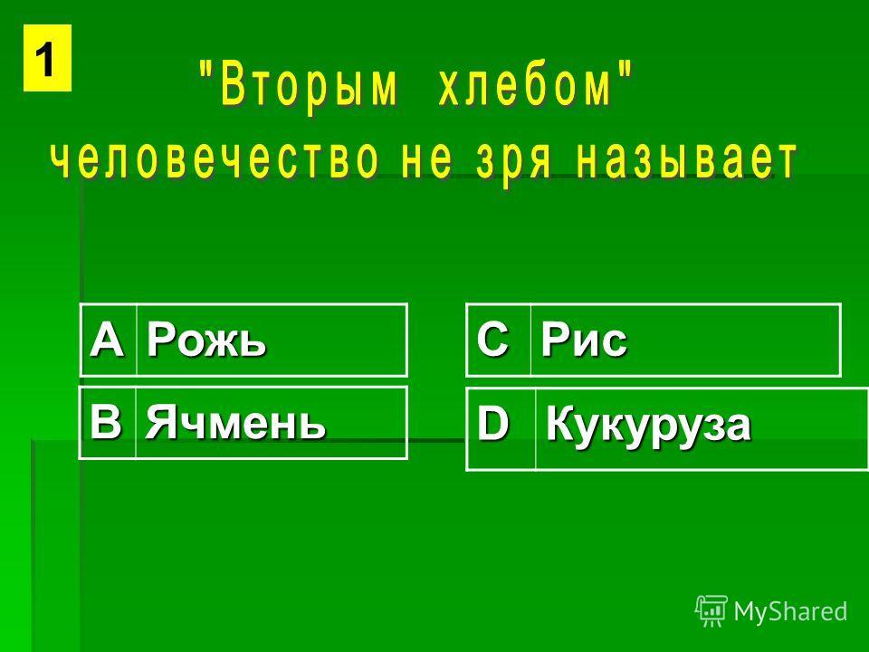 АРожьСРис ВЯчмень DКукуруза 1