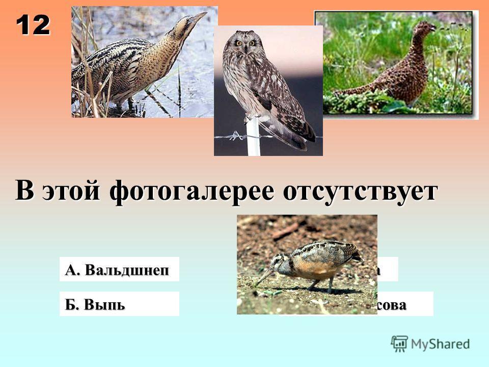 В этой фотогалерее отсутствует А. Вальдшнеп Б. Выпь Г. Болотная сова В. Куропатка 12