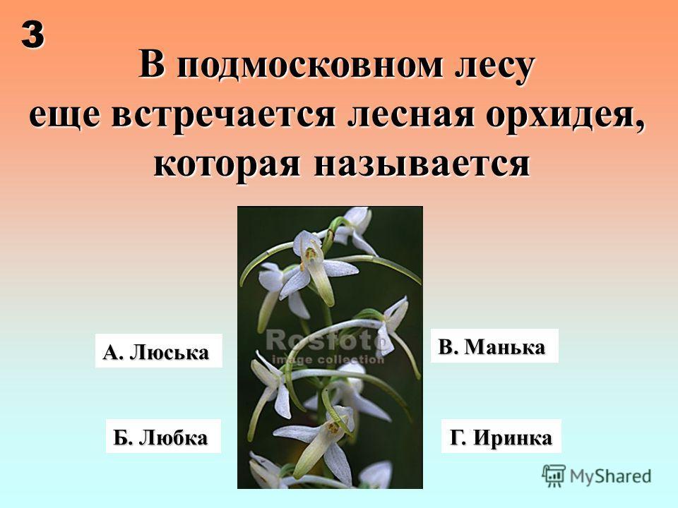 А. Люська В подмосковном лесу еще встречается лесная орхидея, которая называется Г. Иринка Б. Любка В. Манька 3
