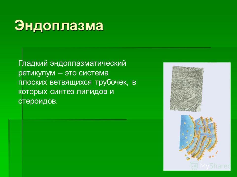 Эндоплазма Гладкий эндоплазматический ретикулум – это система плоских ветвящихся трубочек, в которых синтез липидов и стероидов.