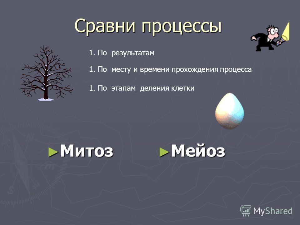 Сравни процессы Митоз Митоз Мейоз Мейоз 1. По результатам 1. По месту и времени прохождения процесса 1. По этапам деления клетки