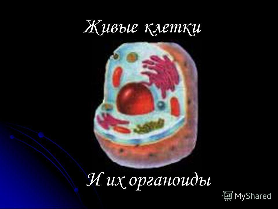 Живые клетки И их органоиды