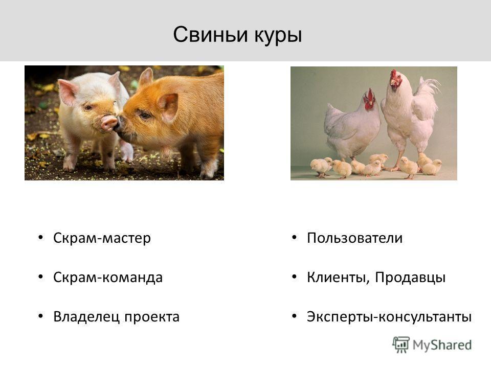 Свиньи куры Скрам-мастер Скрам-команда Владелец проекта Пользователи Клиенты, Продавцы Эксперты-консультанты