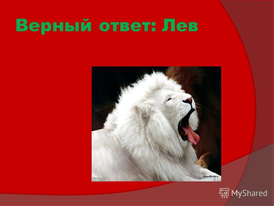 Верный ответ: Лев