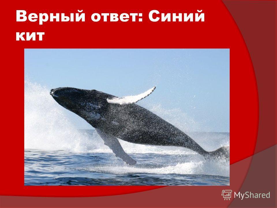 Верный ответ: Синий кит
