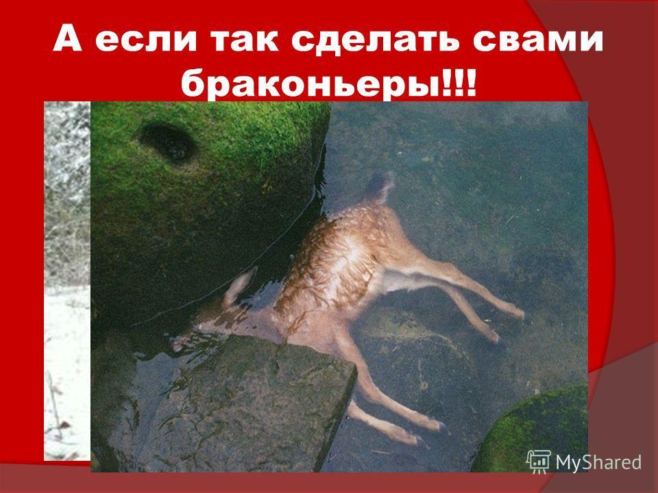 А если так сделать свами браконьеры!!! Задумайтесь!!! Животных становится все меньше и меньше!!!