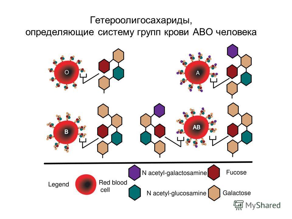 Гетероолигосахариды, определяющие систему групп крови АВО человека