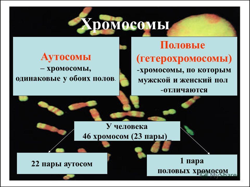 Хромосомы Аутосомы – хромосомы, одинаковые у обоих полов. Половые (гетерохромосомы) -хромосомы, по которым мужской и женский пол -отличаются У человека 46 хромосом (23 пары)_ 22 пары аутосом 1 пара половых хромосом
