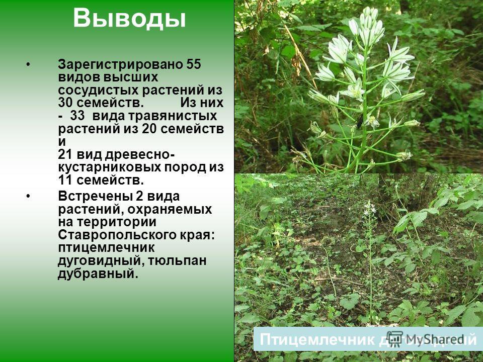 тюльпан дубравный Выводы Зарегистрировано 55 видов высших сосудистых растений из 30 семейств. Из них - 33 вида травянистых растений из 20 семейств и 21 вид древесно- кустарниковых пород из 11 семейств. Встречены 2 вида растений, охраняемых на террито