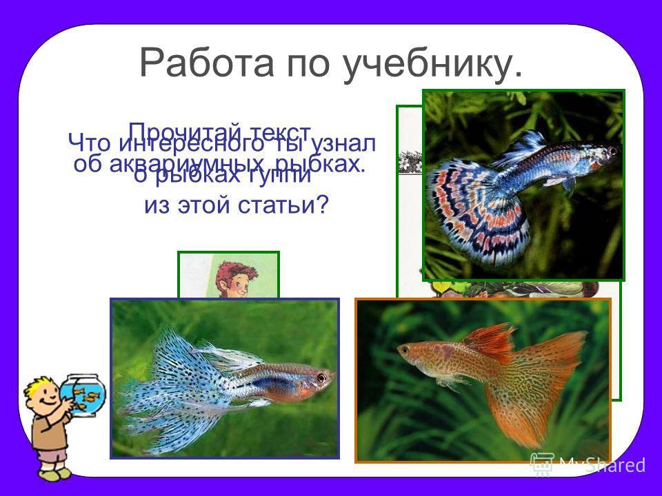 Работа по учебнику. Прочитай текст об аквариумных рыбках. Что интересного ты узнал о рыбках гуппи из этой статьи?