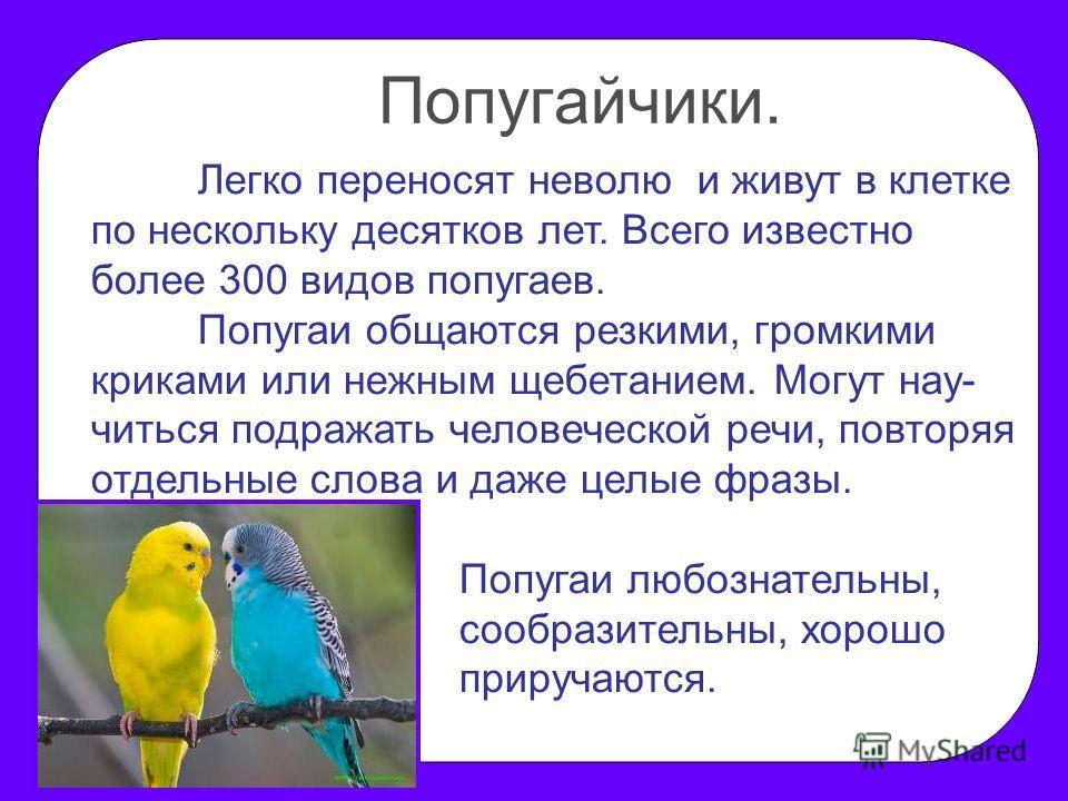 Легко переносят неволю и живут в клетке по нескольку десятков лет. Всего известно более 300 видов попугаев. Попугаи общаются резкими, громкими криками или нежным щебетанием. Могут нау- читься подражать человеческой речи, повторяя отдельные слова и да
