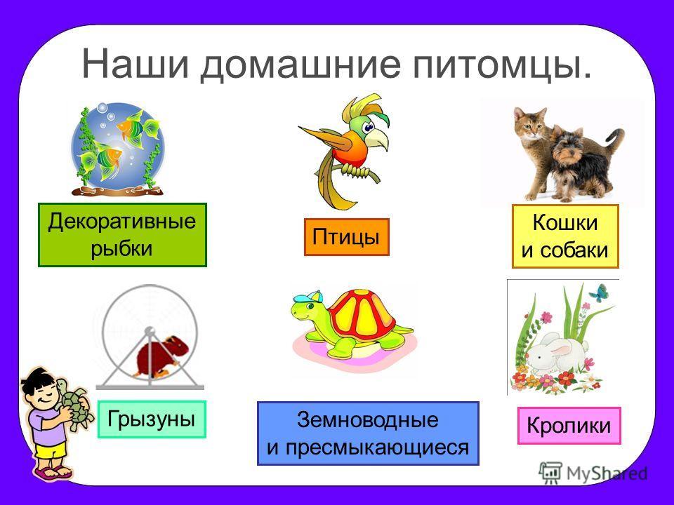 Наши домашние питомцы. Декоративные рыбки Птицы Грызуны Земноводные и пресмыкающиеся Кошки и собаки Кролики