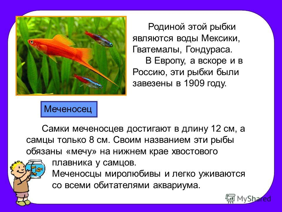 Родиной этой рыбки являются воды Мексики, Гватемалы, Гондураса. В Европу, а вскоре и в Россию, эти рыбки были завезены в 1909 году. Самки меченосцев достигают в длину 12 см, а самцы только 8 см. Своим названием эти рыбы обязаны «мечу» на нижнем крае