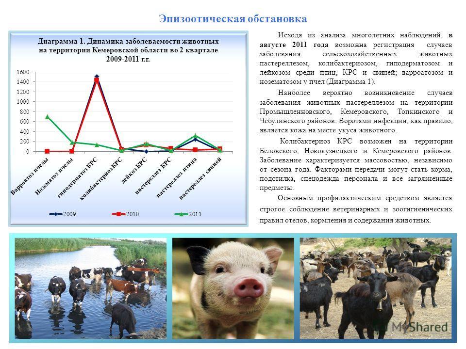 Эпизоотическая обстановка Исходя из анализа многолетних наблюдений, в августе 2011 года возможна регистрация случаев заболевания сельскохозяйственных животных пастереллезом, колибактериозом, гиподерматозом и лейкозом среди птиц, КРС и свиней; варроат