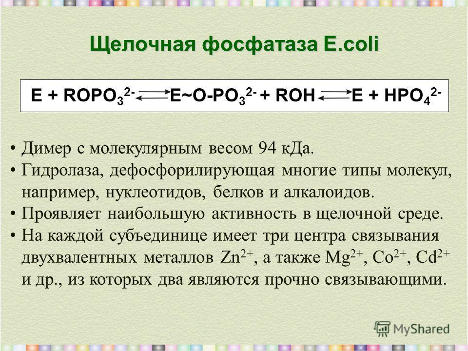 Щелочная фосфатаза E.coli Димер с молекулярным весом 94 кДа. Гидролаза, дефосфорилирующая многие типы молекул, например, нуклеотидов, белков и алкалоидов. Проявляет наибольшую активность в щелочной среде. На каждой субъединице имеет три центра связыв
