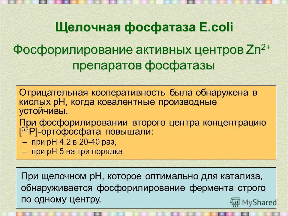Щелочная фосфатаза E.coli Отрицательная кооперативность была обнаружена в кислых рН, когда ковалентные производные устойчивы. При фосфорилировании второго центра концентрацию [ 32 Р]-ортофосфата повышали: –при рН 4,2 в 20-40 раз, –при рН 5 на три пор