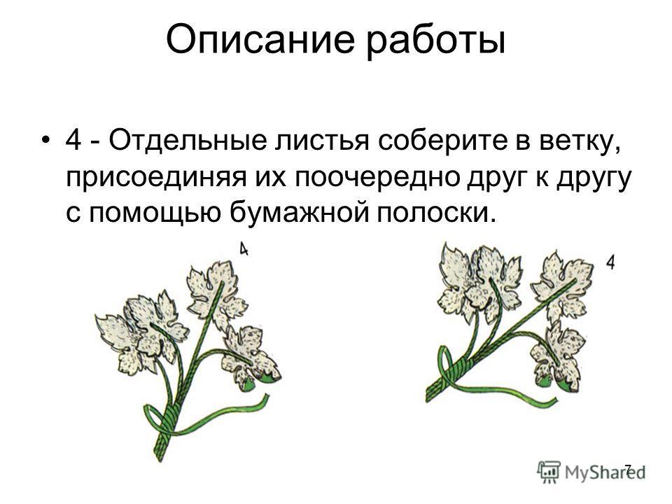 7 Описание работы 4 - Отдельные листья соберите в ветку, присоединяя их поочередно друг к другу с помощью бумажной полоски.