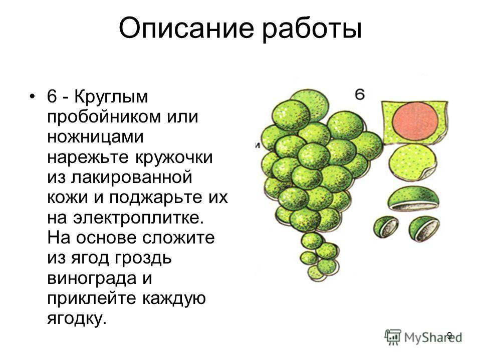 9 Описание работы 6 - Круглым пробойником или ножницами нарежьте кружочки из лакированной кожи и поджарьте их на электроплитке. На основе сложите из ягод гроздь винограда и приклейте каждую ягодку.