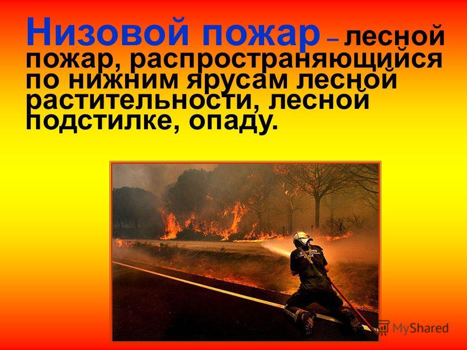 Лесные пожары Низовой пожар Верховой пожар Подземный или торфяной пожар