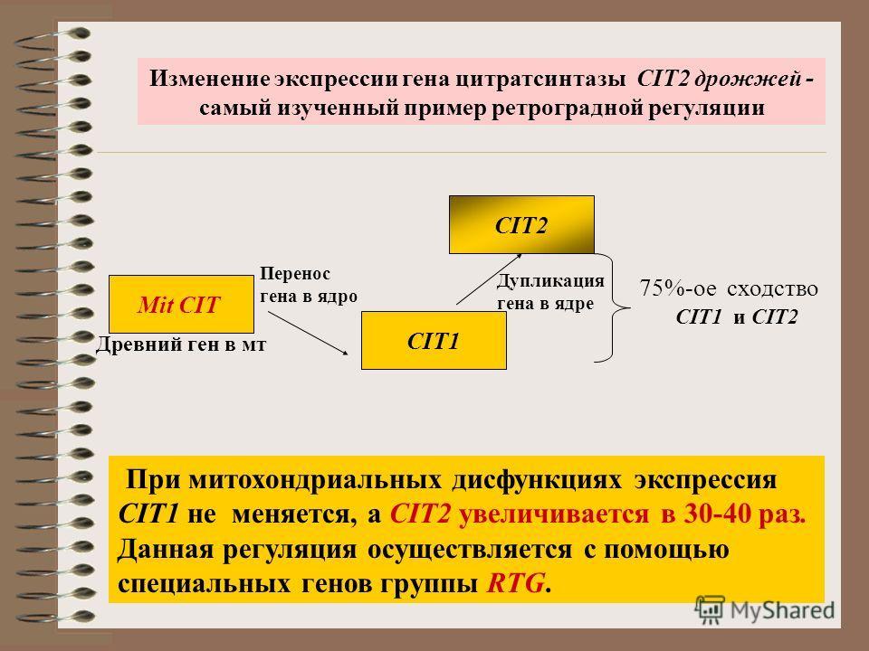 При митохондриальных дисфункциях экспрессия СIT1 не меняется, а СIT2 увеличивается в 30-40 раз. Данная регуляция осуществляется с помощью специальных генов группы RTG. Изменение экспрессии гена цитратсинтазы СIT2 дрожжей - самый изученный пример ретр