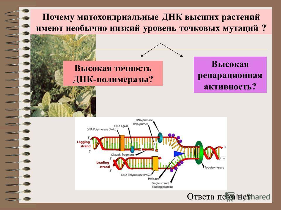 Почему митохондриальные ДНК высших растений имеют необычно низкий уровень точковых мутаций ? Высокая точность ДНК-полимеразы? Высокая репарационная активность? Ответа пока нет