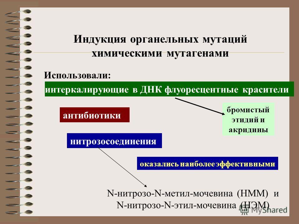 Индукция органельных мутаций химическими мутагенами интеркалирующие в ДНК флуоресцентные красители Использовали: нитрозосоединения оказались наиболее эффективными антибиотики бромистый этидий и акридины N-нитрозо-N-метил-мочевина (НММ) и N-нитрозо-N-