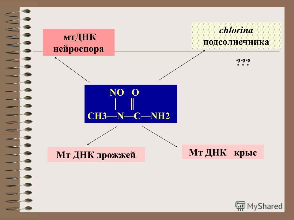 NO O CH3NCNH2 chlorina подсолнечника Мт ДНК крыс мтДНК нейроспора Мт ДНК дрожжей ???