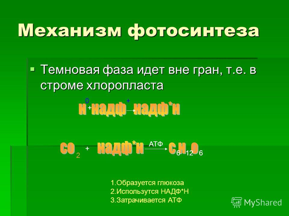 Механизм фотосинтеза Темновая фаза идет вне гран, т.е. в строме хлоропласта Темновая фаза идет вне гран, т.е. в строме хлоропласта 0 + + 2 + 6126 АТФ 1.Образуется глюкоза 2.Использутся НАДФ*Н 3.Затрачивается АТФ