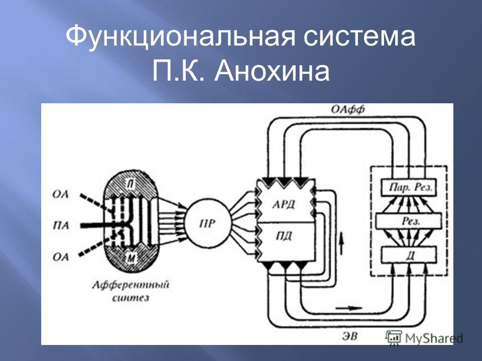 Функциональная система П. К. Анохина