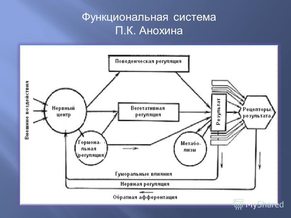 Функциональная система П.К. Анохина