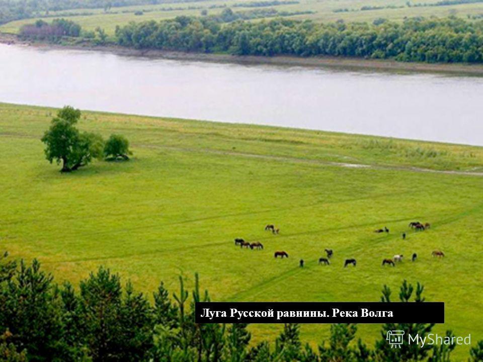 Луга Русской равнины. Река Волга