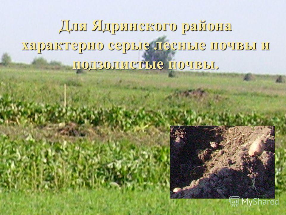 Для Ядринского района характерно серые лесные почвы и подзолистые почвы.
