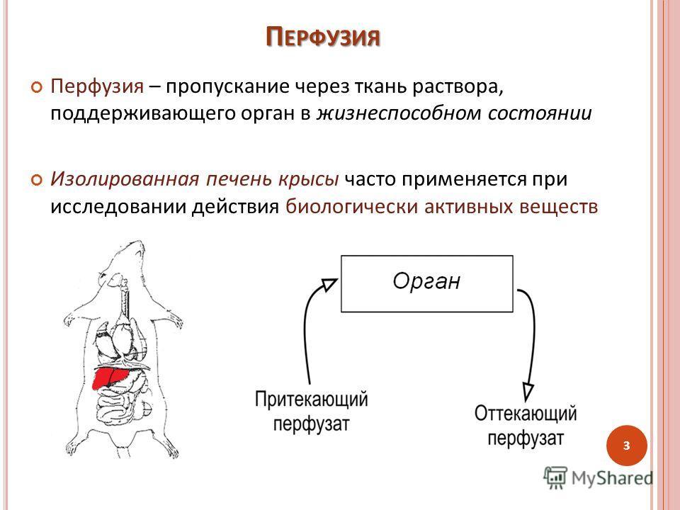 Перфузия – пропускание через ткань раствора, поддерживающего орган в жизнеспособном состоянии Изолированная печень крысы часто применяется при исследовании действия биологически активных веществ П ЕРФУЗИЯ 3