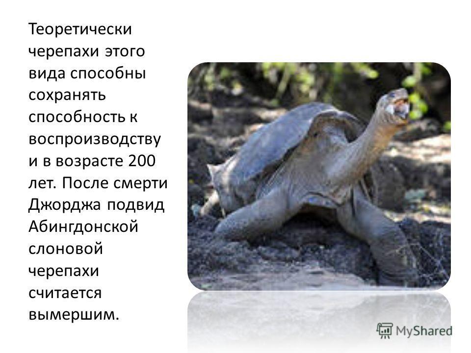 Теоретически черепахи этого вида способны сохранять способность к воспроизводству и в возрасте 200 лет. После смерти Джорджа подвид Абингдонской слоновой черепахи считается вымершим.