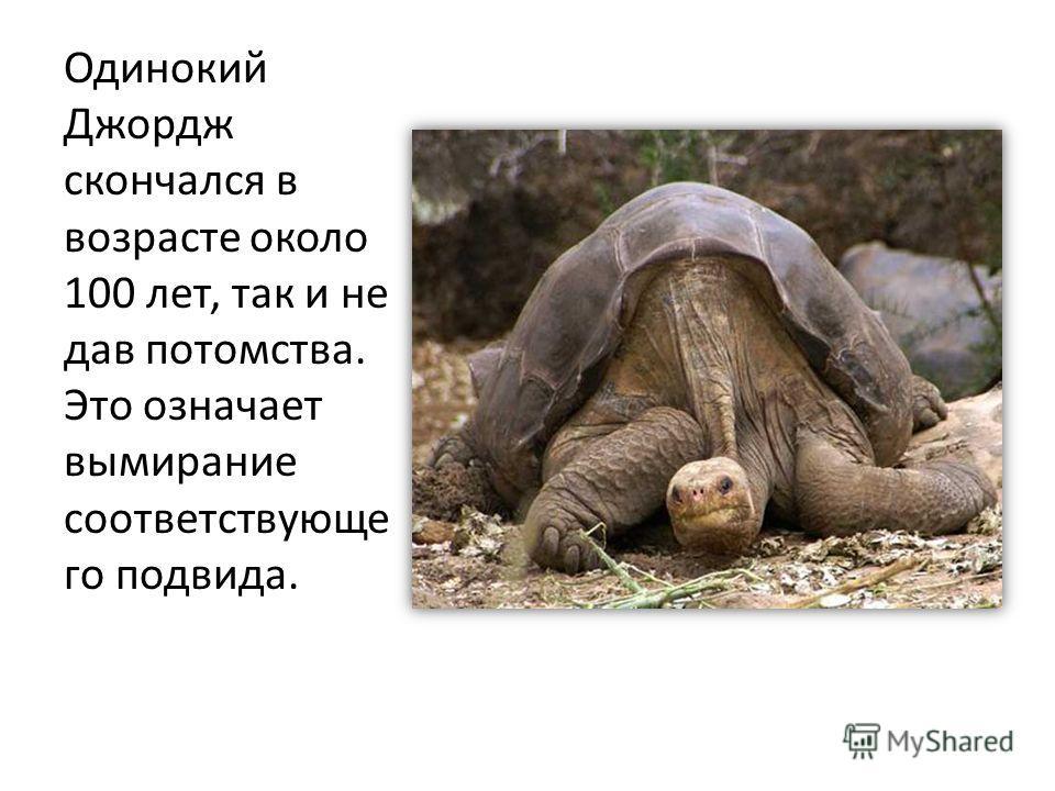 Одинокий Джордж скончался в возрасте около 100 лет, так и не дав потомства. Это означает вымирание соответствующе го подвида.