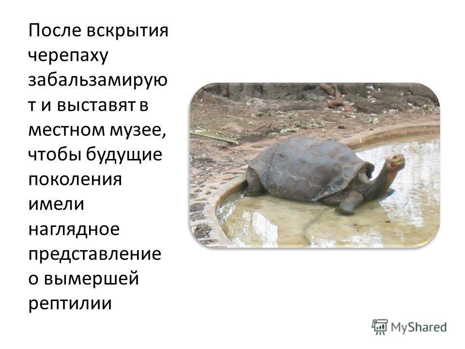 После вскрытия черепаху забальзамирую т и выставят в местном музее, чтобы будущие поколения имели наглядное представление о вымершей рептилии
