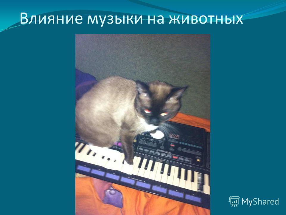 Влияние музыки на животных