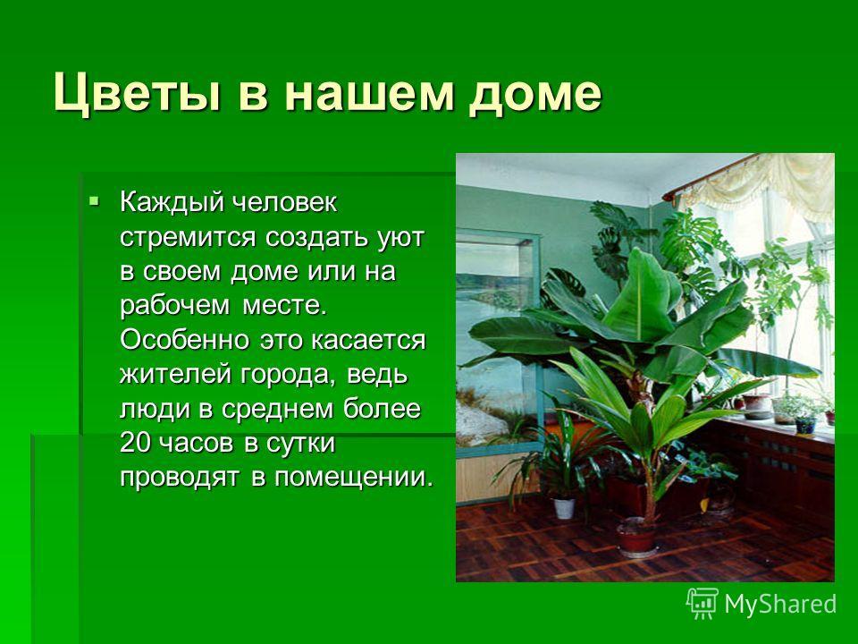 Цветы в нашем доме Каждый человек стремится создать уют в своем доме или на рабочем месте. Особенно это касается жителей города, ведь люди в среднем более 20 часов в сутки проводят в помещении. Каждый человек стремится создать уют в своем доме или на