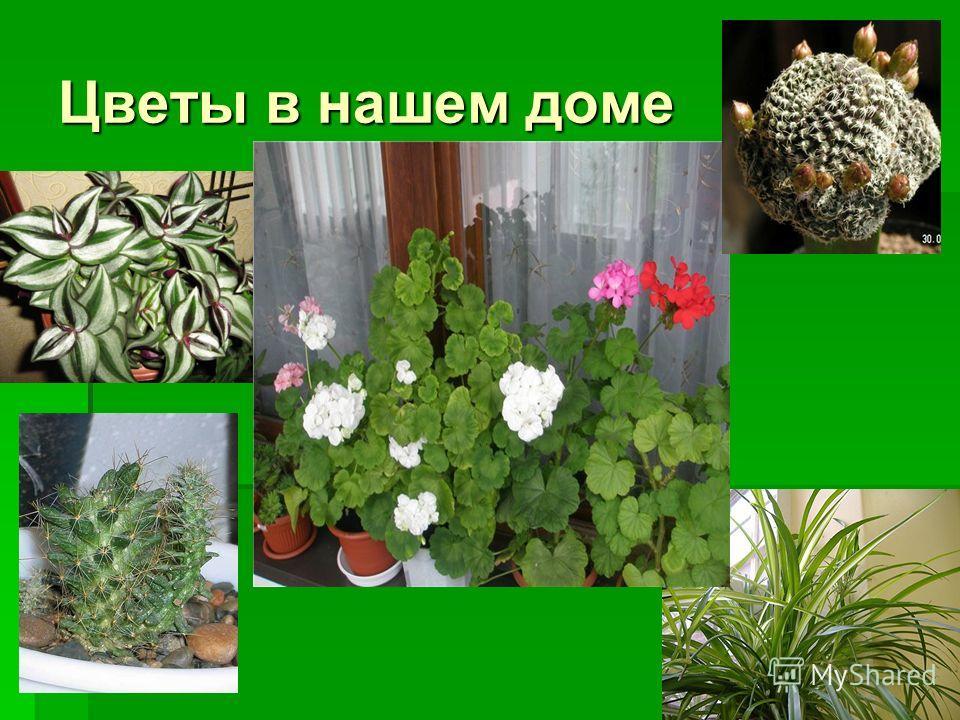 Цветы в нашем доме