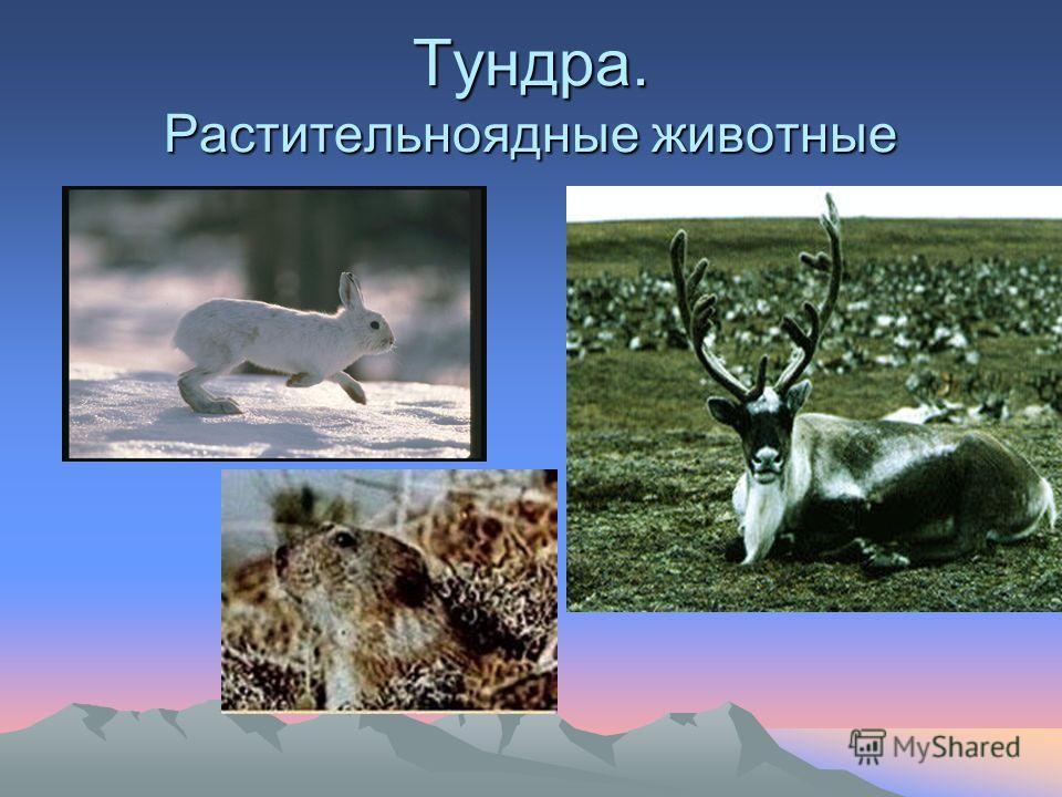 Животный мир по видовому составу богаче растительного. В России до 130 тысяч видов животных, а высших растений всего 18 тысяч видов. В животном мире наиболее многочисленны насекомые (их 90 тысяч видов).