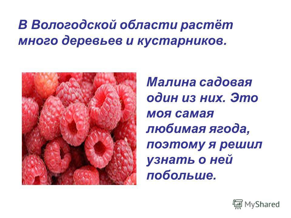 Малина садовая один из них. Это моя самая любимая ягода, поэтому я решил узнать о ней побольше. В Вологодской области растёт много деревьев и кустарников.