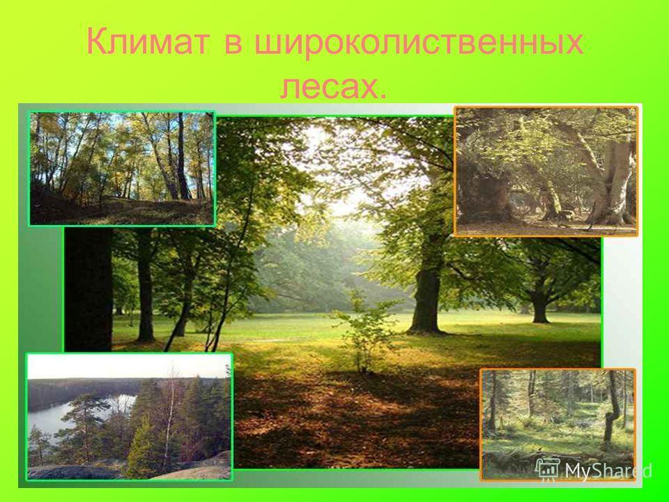 Климат в широколиственных лесах.